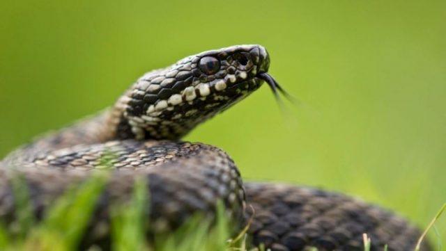 Змеиный день в народе отмечают 22 июня